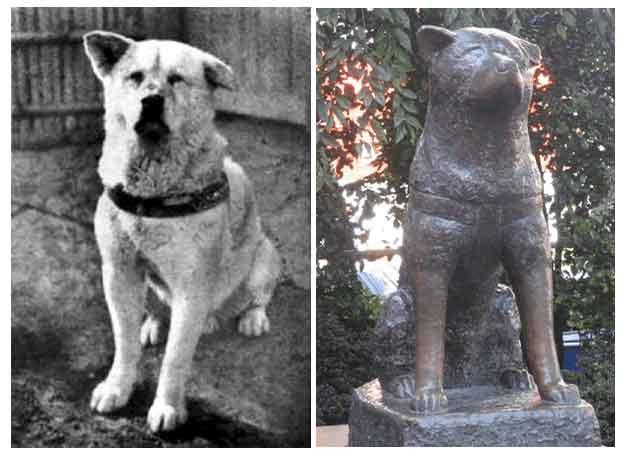 historia de perro fiel japonés