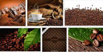 cual es origen del cafe