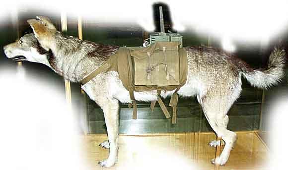 perro arma secreta